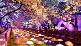 07 Days Korea – Autumn Special