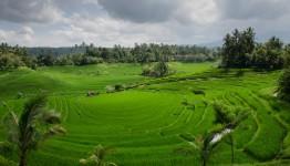 4D3N Bandung